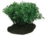 Искусственное растение, Глоссостигма, 10см