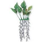 Растение пластиковое с корнями Анубиас 20см 2шт
