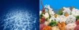Фон двухсторонний 50см. Синее море/ Белые кораллы