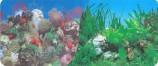 Фон двухстор 60см. Кораллы (синий) / Раст с белым камнем (синий)