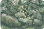 Фон односторонний 60см. Камни