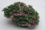 Композиция из кораллов пластиковая 22х18х10см (SH201CG)