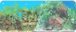 Фон двухсторонний 30см. Растительный нимфея (синий) / Раст