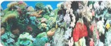 Фон двухсторонний 40см. Кораллы (синий) / Кораллы (синий)