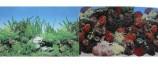 Двухсторонний Морские кораллы/Подводный мир 60х150см