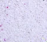 Грунт коралловый S мелкий 1-2 мм 10кг
