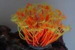 Коралл силиконовый желто-красный 14х11х9см SH205SRY