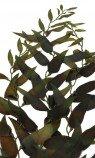 Растение шелковое, морские водоросли 40см