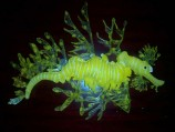 Морской конёк силиконовый SEA DRAGON