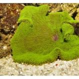 Морские Губки, Огненные кораллы, Медузы, Цериантарии, Актинии, Зоантусы и Дискоактинии