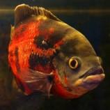 Пресноводные рыбы