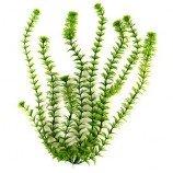 Растение пластиковое Амбулия (Ambulia) 46см